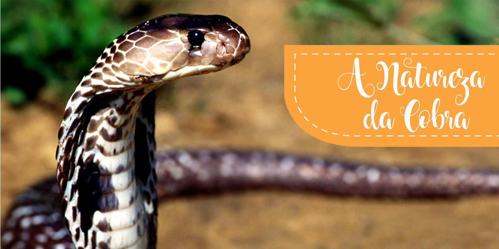A Natureza da Cobra